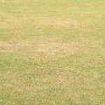 Geen groen gras